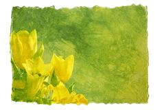 Free Hand-made Paper With Flowers Royalty Free Stock Images - 13556749