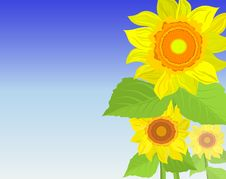 Free Background With Sunflowers Stock Photography - 13556862