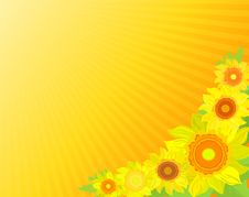 Free Background With Sunflowers Royalty Free Stock Image - 13556876