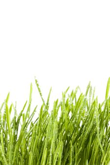 Free Isolated Grass Royalty Free Stock Image - 13558796