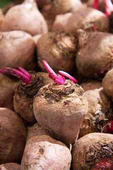 Free Beet Roots Royalty Free Stock Photos - 13558808