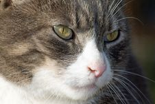 Free Close-up From Cat Stock Photo - 13559650