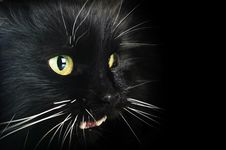 Free Black Cat Stock Photo - 13559860