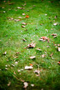 Free Autumn Leaves On Healty Dutch Grass Stock Photography - 13566342