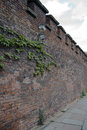 Free Ivy And Camera On Red Bricked Wall. Royalty Free Stock Photography - 13568597