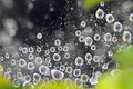 Free Water Drops At Spider Net Stock Image - 13569391
