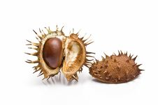 Free Chestnuts In Its Capsule. Stock Photos - 13561443