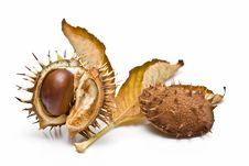 Free Chestnuts In Its Capsule With A Leaf. Stock Images - 13561454