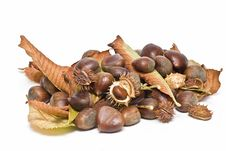 Free A Lot Of Chestnuts. Stock Images - 13561474