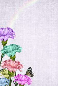 Rainbow Carnations Royalty Free Stock Images