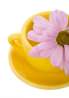 Yellow Cup And Chrysanthemum Stock Photo