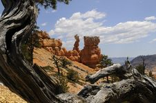 Free Bryce Canyon Scenic Royalty Free Stock Photography - 13561747