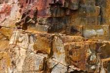 Free Fossil Wood Surface Stock Photos - 13563393
