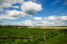 Free Agriculture Stock Image - 13563751