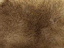 Free Beige Fur Texture Stock Images - 13563814
