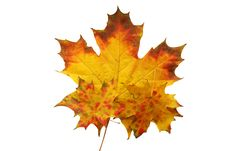 Free Red Autumn Sheet Stock Photography - 13564452