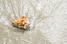 Seashell On Beach Royalty Free Stock Image