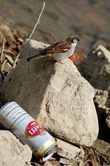 Free Rubbish & Nature Royalty Free Stock Image - 13565226