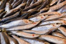 Free Fresh Fish At The Marketplace Stock Photo - 13565470