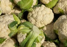 Free Organic Cauliflower Royalty Free Stock Images - 13566529