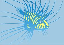 Strange Blue-and-yellow Fish Royalty Free Stock Images