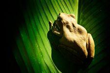 Little Frog 2 Stock Photo