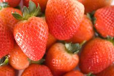 Free Strawberries Royalty Free Stock Photo - 13568805