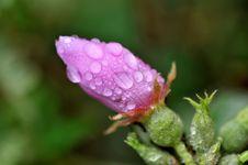 Free Macro Flower Water Drop Stock Photo - 13568930