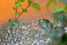 Free Water Drops At Spider Net Stock Images - 13569564