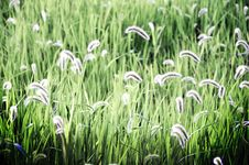 Free Grass Stock Images - 13569994