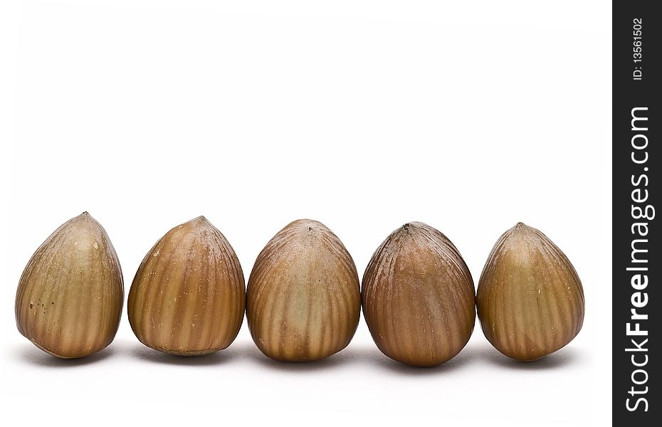 A line of hazelnuts.