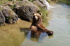 Free Brown Bear, Grizzly Bear, Bear, Wildlife Stock Images - 135689404