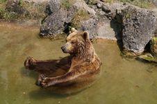 Free Brown Bear, Grizzly Bear, Bear, Fauna Royalty Free Stock Photos - 135689418