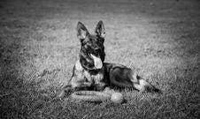 Free Dog, Black, Black And White, Dog Like Mammal Stock Photography - 135689702