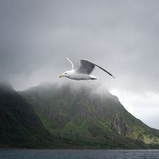 Free Seabird, Bird, Sea, Sky Stock Photo - 135689820