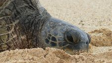 Free Turtle, Terrestrial Animal, Sea Turtle, Reptile Stock Photography - 135690272