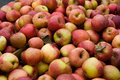 Free Apple Shopping At Farmer S Market Royalty Free Stock Image - 13573766