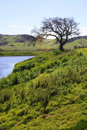 Free Leafless Tree Stock Photos - 13579543