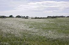 Grass Plain, Taiwan Stock Photo