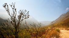Free Jonkershoek Valley Burnt Tree Royalty Free Stock Photo - 13570185