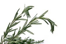 Free Rosemary Leaves Royalty Free Stock Photos - 13574888