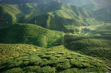 Free Tea Plantation Stock Photos - 13576133