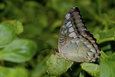 Free Butterfly On Flower Royalty Free Stock Images - 13576689