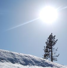 Free Pine Tree In The Snow Royalty Free Stock Images - 13576859