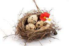 Free Bird S Nest Stock Photography - 13577972