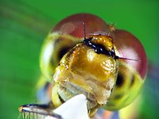 Free Portrait Of Dragonfly (Odonata) Stock Photos - 13579313