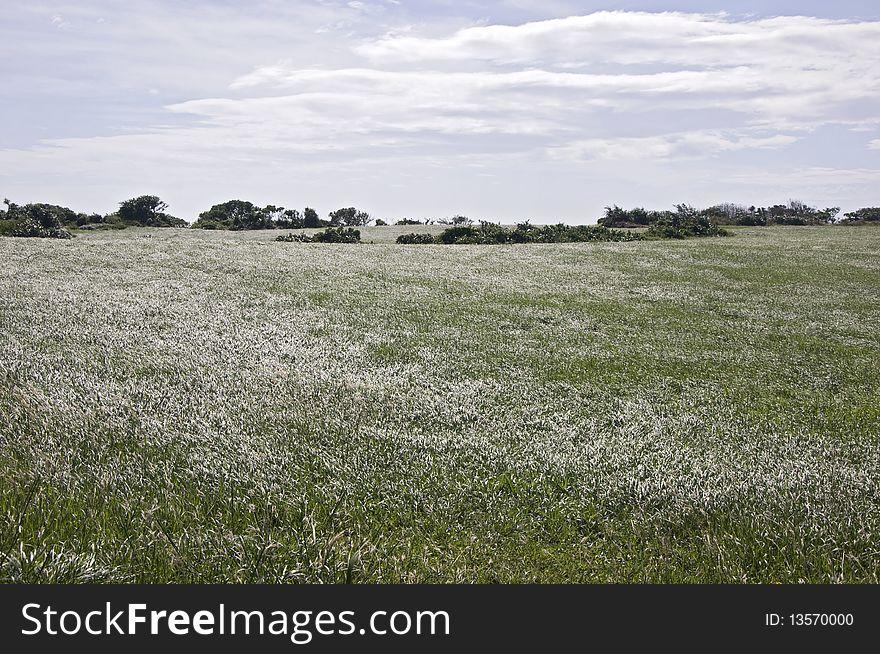 Grass Plain, Taiwan