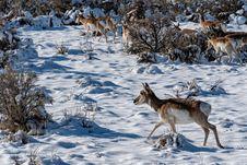 Free Herd Of Deers Royalty Free Stock Images - 135770879