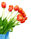 Free Fresh Tulips In Boots Royalty Free Stock Images - 13581519