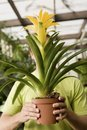 Free Man Holding Exotic Potted Plant Royalty Free Stock Image - 13585116